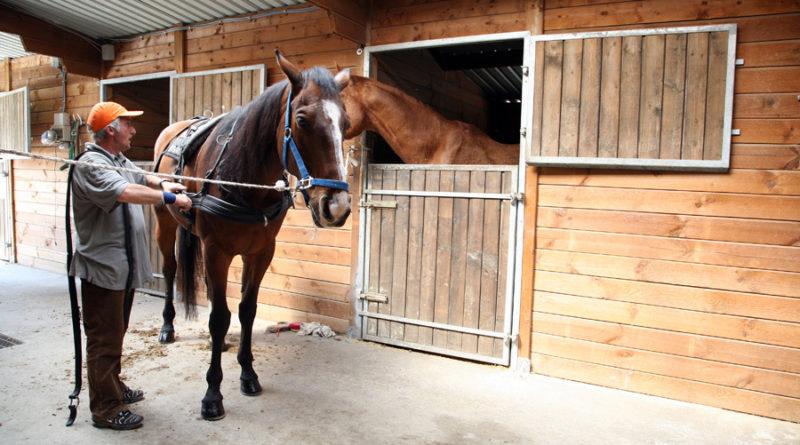 Cavalli al vivaio le Dune di Borgo Mimose